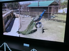 NHK技研公開2012 145インチ スーパーハイビジョン プラズマテレビ
