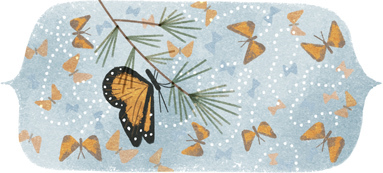 オオカバマダラ蝶の山 発見 41 周年