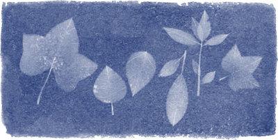 Anna Atkins' 216th Birthday