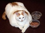 肥満猫@ニュージャージー
